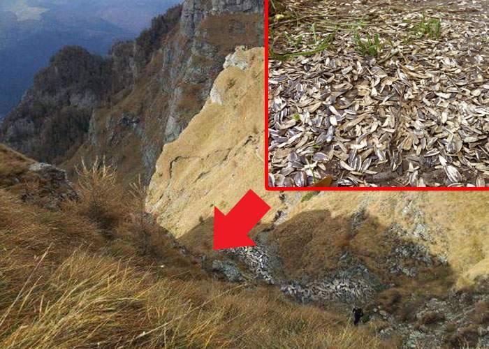 Primăria Buşteni cumpără 174 tone de coji de seminţe ca să refacă marcajul pe traseele montane