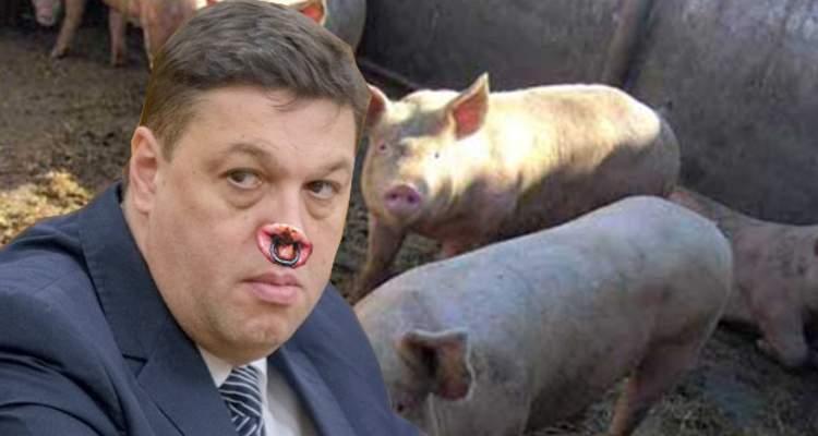 Paşaportul lui Şerban Nicolae a fost anulat, pentru a preveni răspândirea pestei porcine