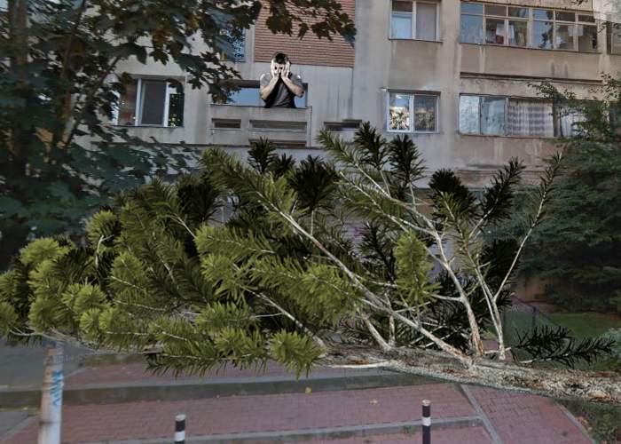 Sinistrat în Bucureşti. A căzut un copac în faţa uşii blocului şi nu mai poate ajunge la cârciumă!