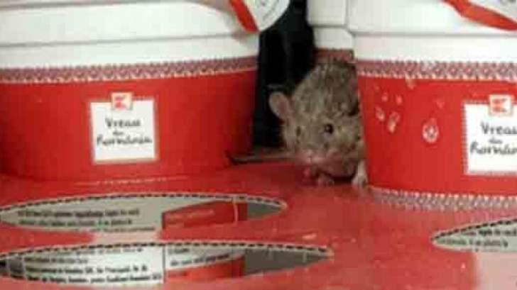 Şoarecele din Kaufland riscă să moară de foame după ce românii au golit magazinul