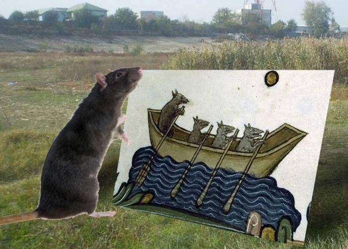 Urmașul șobolanului care a adus ciuma în Europa a fost găsit în Parcul Natural Văcărești