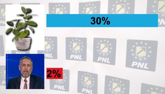 PNL s-a pripit. Ficusul din sediul partidului, cotat cu şanse mai mari decât Marian Munteanu