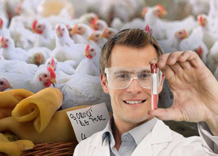 Experiment genetic reuşit! Savanţii români au obţinut un pui de găină cu şorici