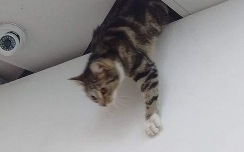 Se aşteaptă cu orele la spitalul din Craiova: medicii, ocupați să prindă pisicile din tavan