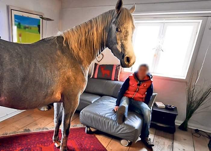 Revoltă la Strehaia! După noua lege e interzis să ţii mai mult de 3 cai în casă