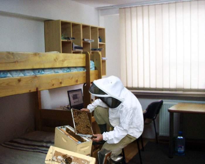 După ani de stat la cămin, un student ingenios a reuşit să facă primul stup de gândaci din istorie