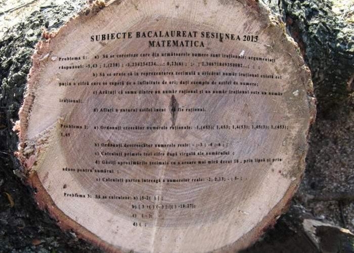 Miracol! Subiectele pentru Bac au apărut într-un trunchi de copac