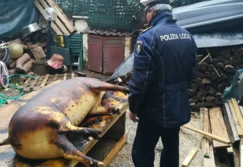 Amendă meritată! Barbarii din Italia beau Garrone în loc de pălincă la tăiatul porcului