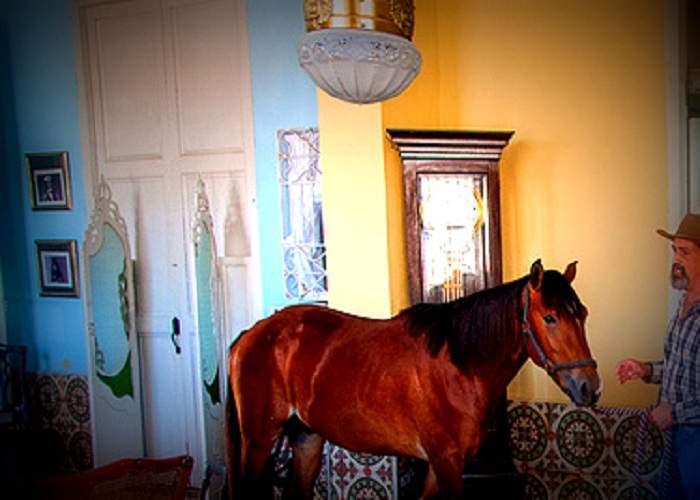 Un ţigan şi-a bătut calul pentru că s-a bălegat afară şi nu pe covorul din sufragerie