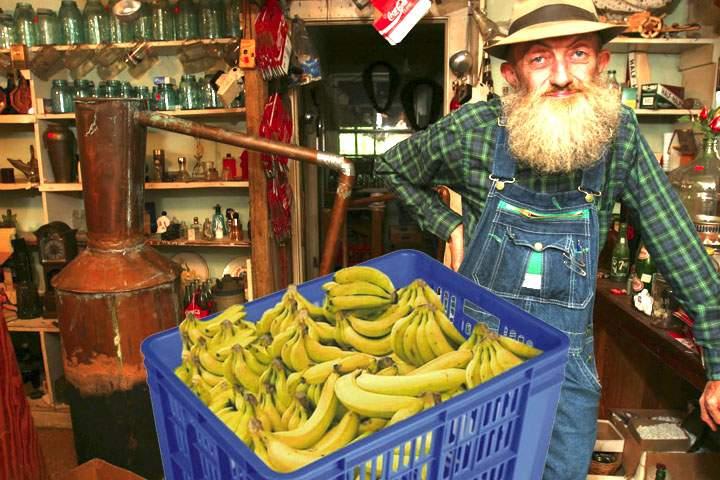 Pregătiri pentru încălzirea globală! Românii învață să facă țuică de banane