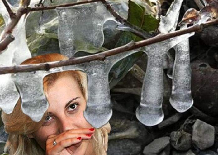 Poza zilei: În grădina Alinei Plugaru s-au format ţurţuri de o formă necunoscută