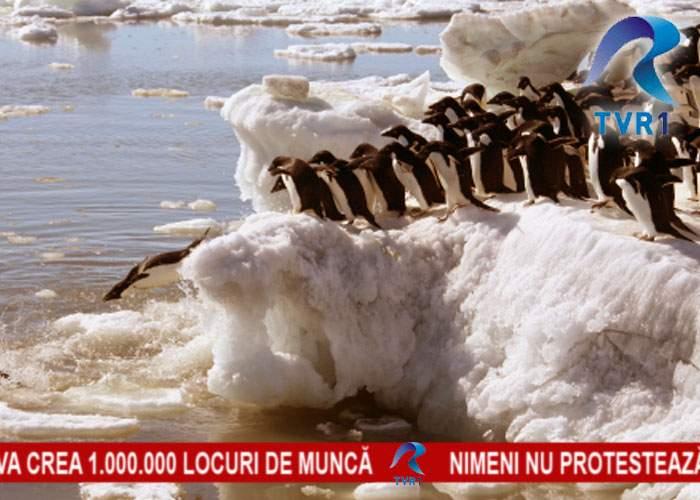Se întrevăd proteste diseară? Televiziunile îşi refac stocul de documentare cu pinguini