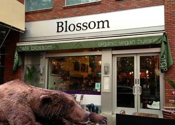 Urs găsit mort de foame lângă tomberonul unui restaurant vegan, unde aştepta să vină ceva comestibil