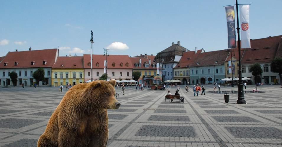 50.000 de urşi s-au înscris în clasa I în Braşov, că au auzit că se dă miere gratis
