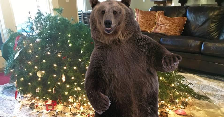 Un braşovean se plânge că un urs îi tot intră pe geam şi îi dărâmă bradul de Crăciun