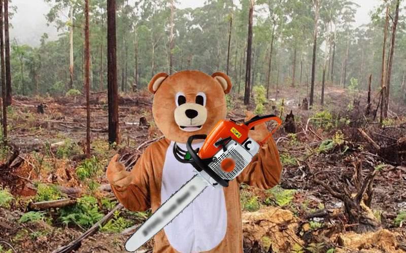 Surse: în România mai sunt doar 2 urşi, restul sunt hoţi de lemne costumaţi