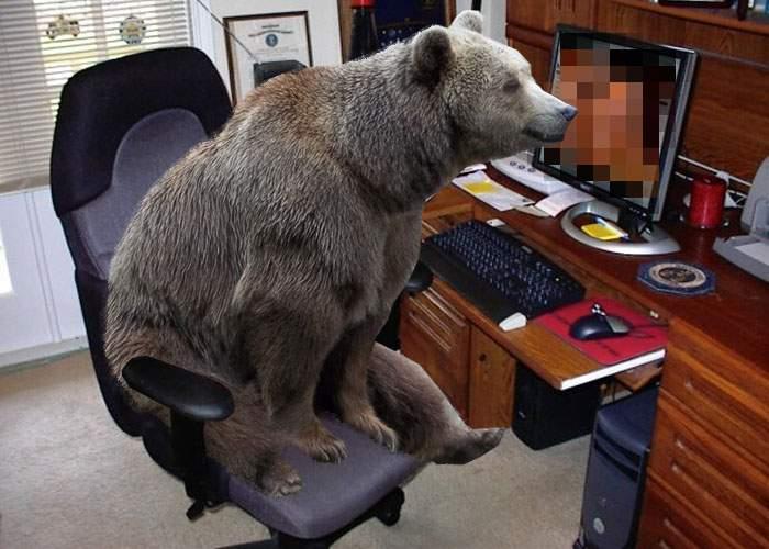 Un urs a intrat într-o cabană şi a descărcat 500 GB de porno, susţine cabanierul