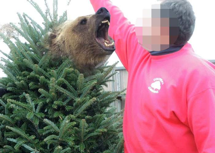 Un bucureştean a făcut reclamaţie la OPC după ce a găsit un urs în bradul de Crăciun