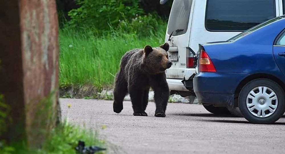 Secțiile de vot din Brașov și Secuime s-au închis, că s-a întunecat și poate vine ursul