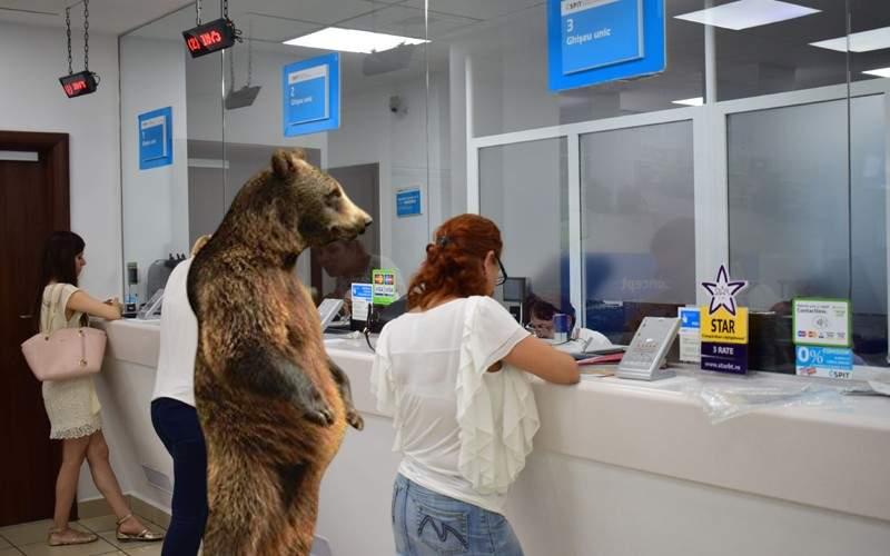 Mai mulţi urşi din Braşov şi-au făcut viză de flotant ca să nu-i mai hărţuiască poliţia
