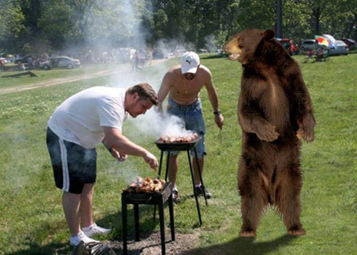 Cel mai enervant urs! S-a învăţat să vină la grătare, stă pe margine, sparge semințe şi îşi dă cu părerea