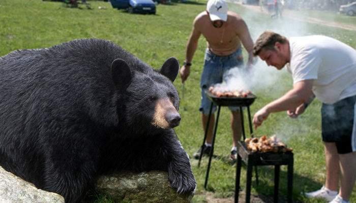 Din cauza grătaragiilor iresponsabili care le dau mici, 80% din urşi au colesterolul prea mare