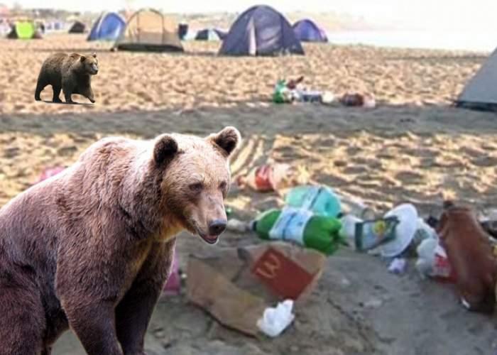 În Vama Veche au fost aduşi urşi gunoieri, ca să cureţe plaja de resturile lăsate de turişti