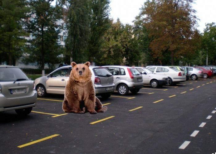 Valea Prahovei, sub teroare! După ursul gunoier, a apărut un pericol şi mai mare: ursul parcagiu