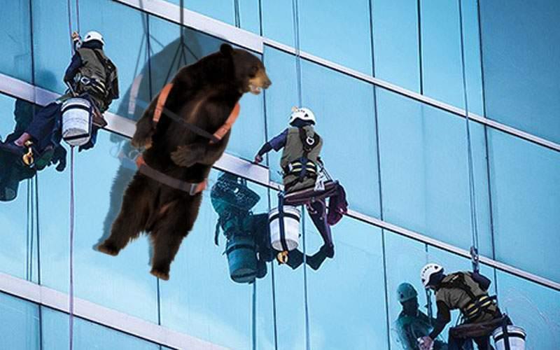 Alpinişti utilitari, atacaţi de un urs utilitar pe faţada unui bloc din Braşov