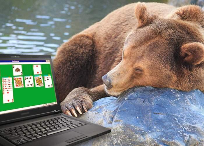 Primul semn că vine toamna! Urşii care lucrează la stat s-au cărat deja acasă să hiberneze