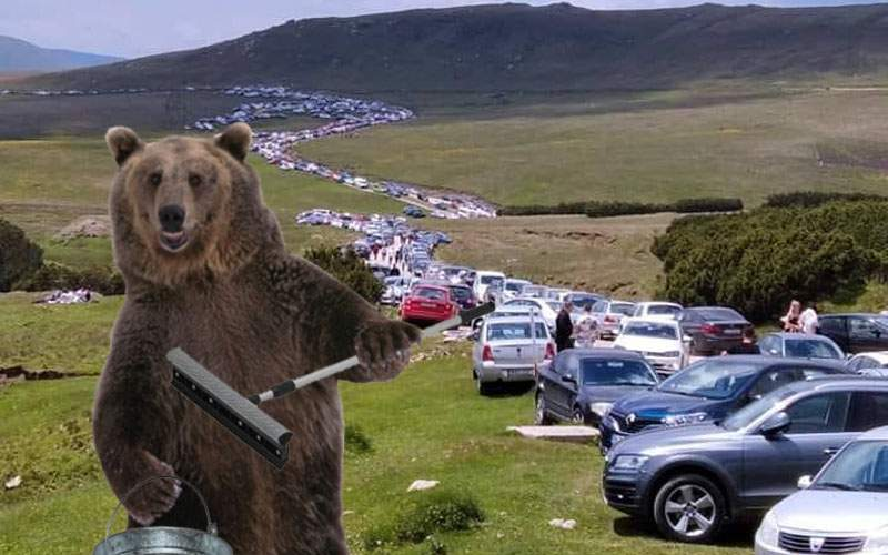 Ursul care spală parbrize pe platoul Bucegilor s-a îmbogăţit în acest weekend