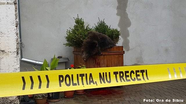 20 de lucruri despre împușcarea ursulețului din Sibiu