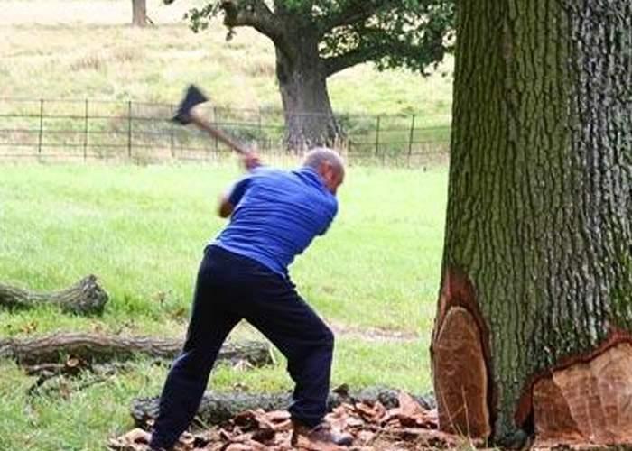Defrişare din culpă: un vasluian beat a tăiat 174 de copaci, crezând că sunt vecini de-ai lui