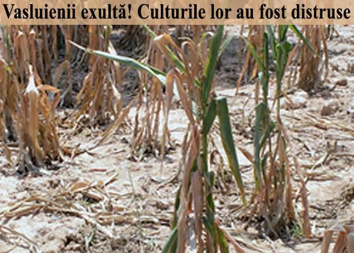 """Vasluienii se bucură pentru culturile distruse de caniculă: """"La toamnă nu muncim!"""""""