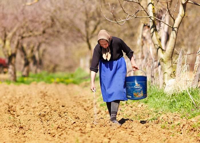 Adevărul despre legumele gustoase româneşti! Primăvara, ţăranii presară câmpul cu Vegeta