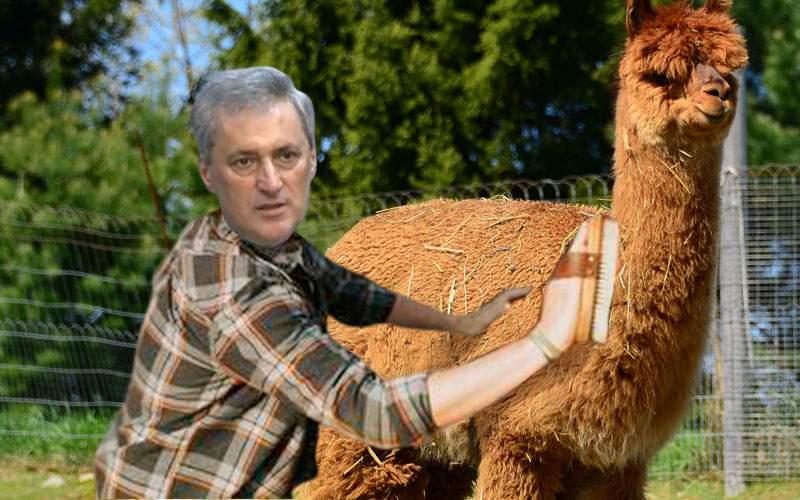 Ministrul de Interne i-a țesălat alpaca lui Godină, ca să nu mai fie așa supărat