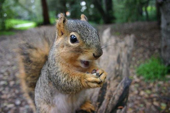 Anchetă. O grupare de veveriţe din Austria exportă camioane de ghinde din România