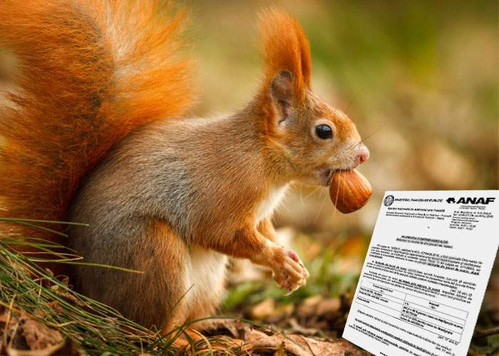 O veveriţă din parcul Tineretului a primit înştiinţare de la ANAF că are de adus 600 de ghinde pe 2012