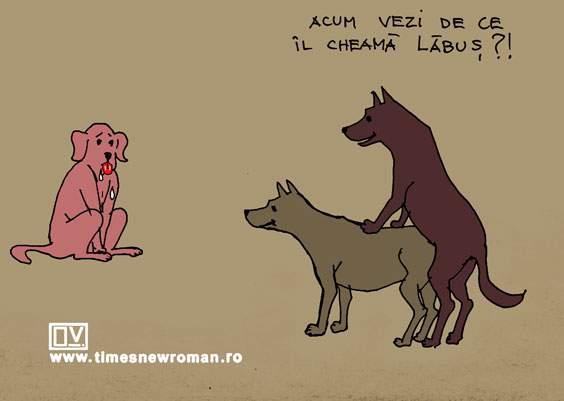 Nume de câine