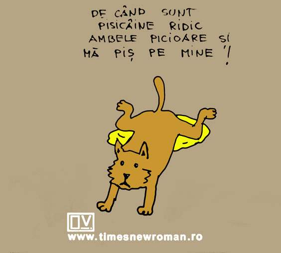 Problema pisicâinelui
