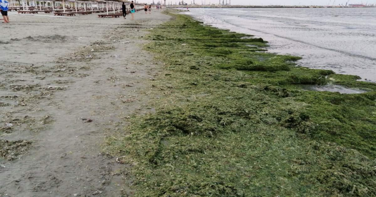 Veganii, îndemnați să-și facă concediul în țară, că e plin de alge pe litoral