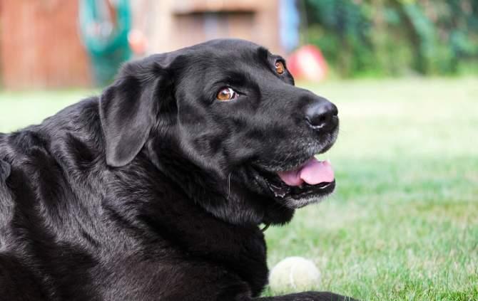 Prințul Harry şi-a botezat câinele după o excursie în Africa, unde l-a înjurat un român