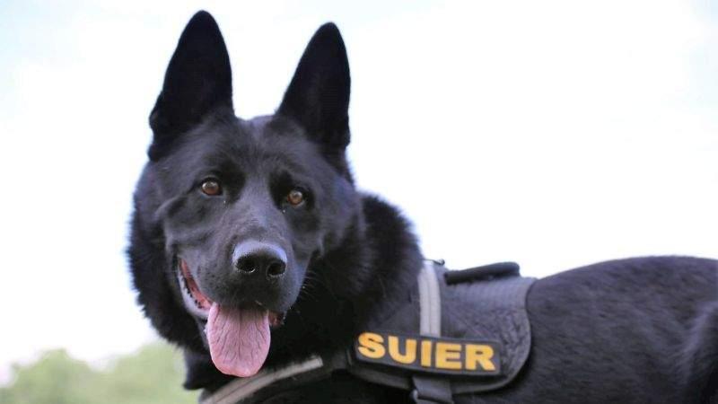 Încă o postare virală cu câinele polițist Șuier. A arătat cum nu se ia șpagă