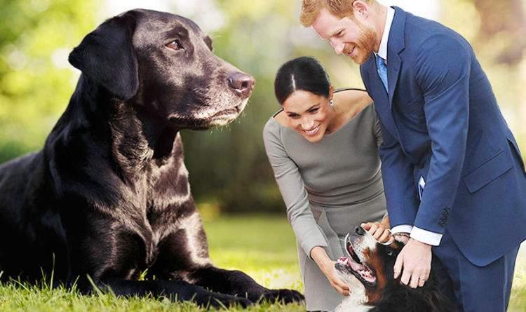 10 lucruri despre câinele prințului Harry