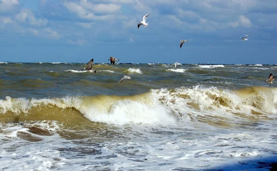 Marea Neagră, tot mai agitată de când n-a mai scăpat nimeni cocaină în ea