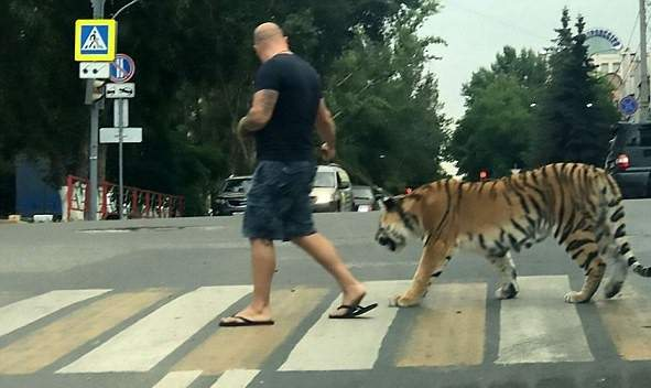 """Nuţu Cămătaru se plânge că aşa-zisele pensiuni """"pet friendly"""" nu primesc tigri"""