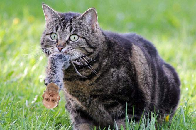 Breaking news! Fostul ministru Chiţoiu a fost prins de o pisică