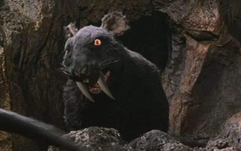 Șobolanul cu colți sabie, crezut dispărut, trăiește în subsolul spitalului din Pitești!