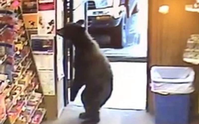 Urs împușcat în Miercurea Ciuc, că tot intra în magazine și cerea pâine în română