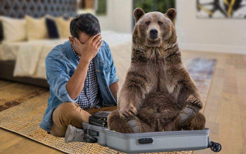 Un bucureștean întors de la munte s-a trezit cu un urs în troller
